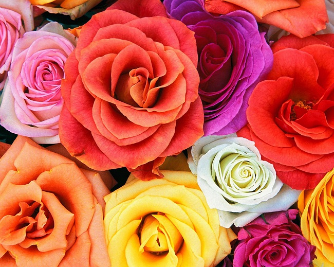 Love Blooms Roses Bunch Of Flowers