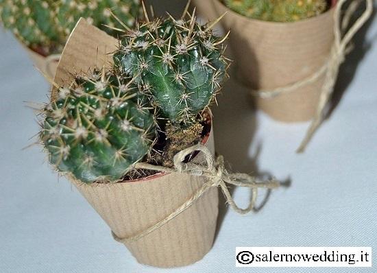 piante succulente o